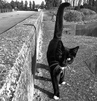 Ο Αλέξανδρος Δουμάς για τις γάτες 34f8d761a8c
