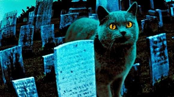 βγαίνω με έναν άντρα με γάτες ηλεκτρονικά μηνύματα γνωριμιών