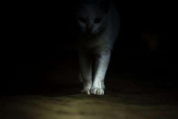 Η γάτα Αγαύη της Λούλας Αναγνωστάκη